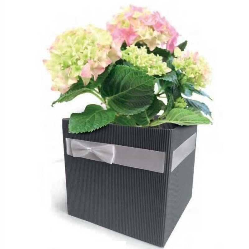 Utilisation du cache-pot en carton avec un plant d'hortensia