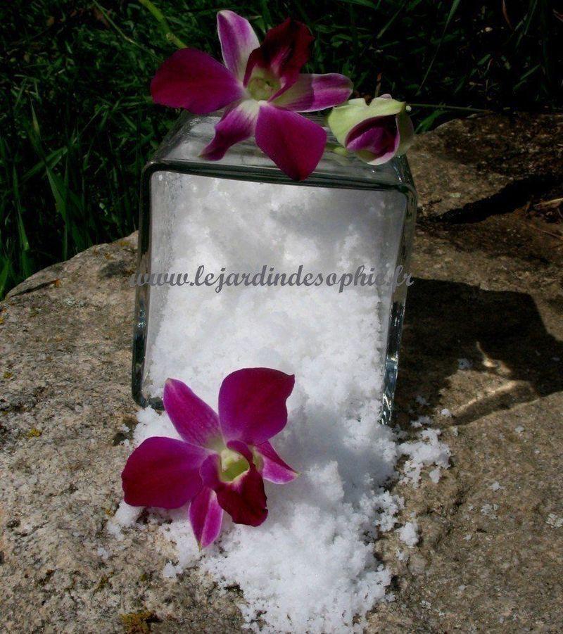 Présentation de la neige florale avec des fleurs d'orchidée